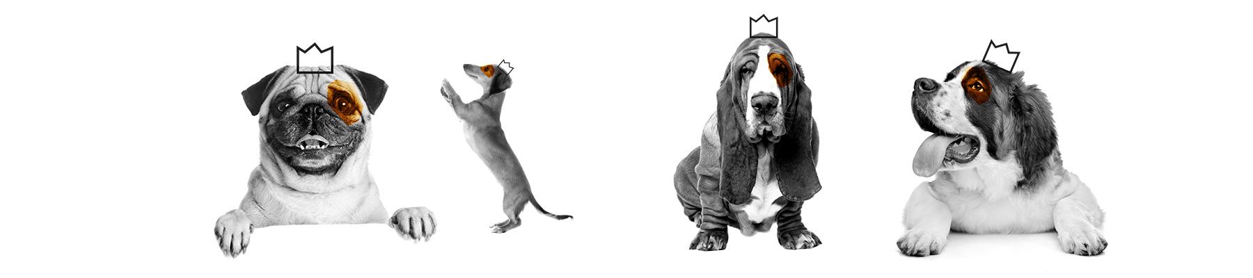 koenig-koffein-brand-corporate-design-identity-dogs-by-max-duchardt-gr